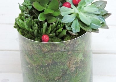 Succulents in Glass Vase