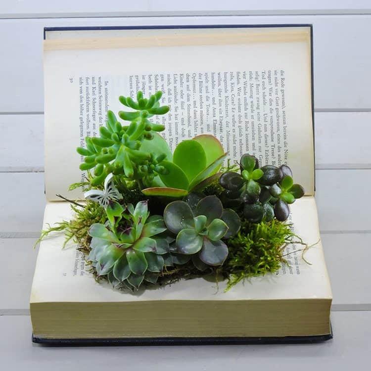 Βιβλίο με φυτεμενα παχύφυτα
