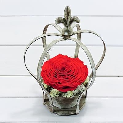 τριαντάφυλλο που ζει για παντα