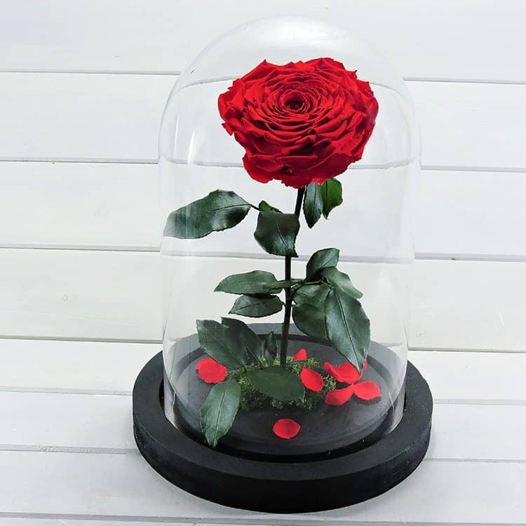 Una rosa (forever roses)