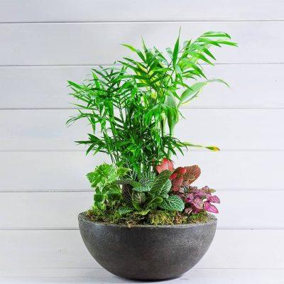 σύνθεση φυτων