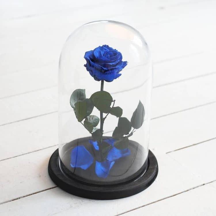 Μπλε τριαντάφυλλο που ζεί για πάντα