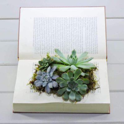 βιβλίο με παχύφυτα προτότυπο δώρο