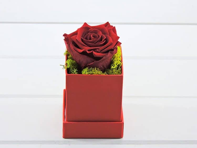 Special one (forever rose)