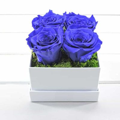 Azure dreams(forever roses)