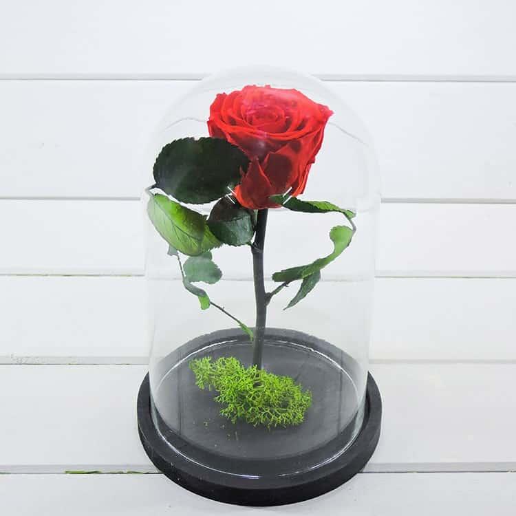 Forever rose eternity rose τα τριανταφθλλα που ζουν για παντα