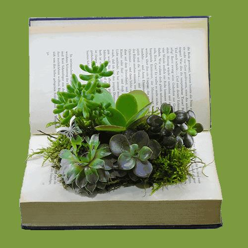 παχυφυτα φυτεμενα σε βιβλίο